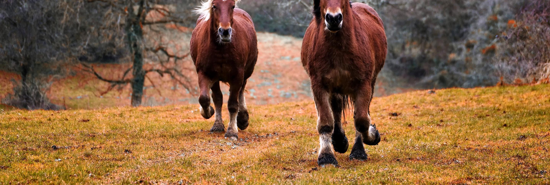 fång-hästar-hovar